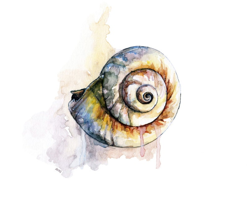 Seashell Painting 3  Print from Original Watercolor Painting image 0