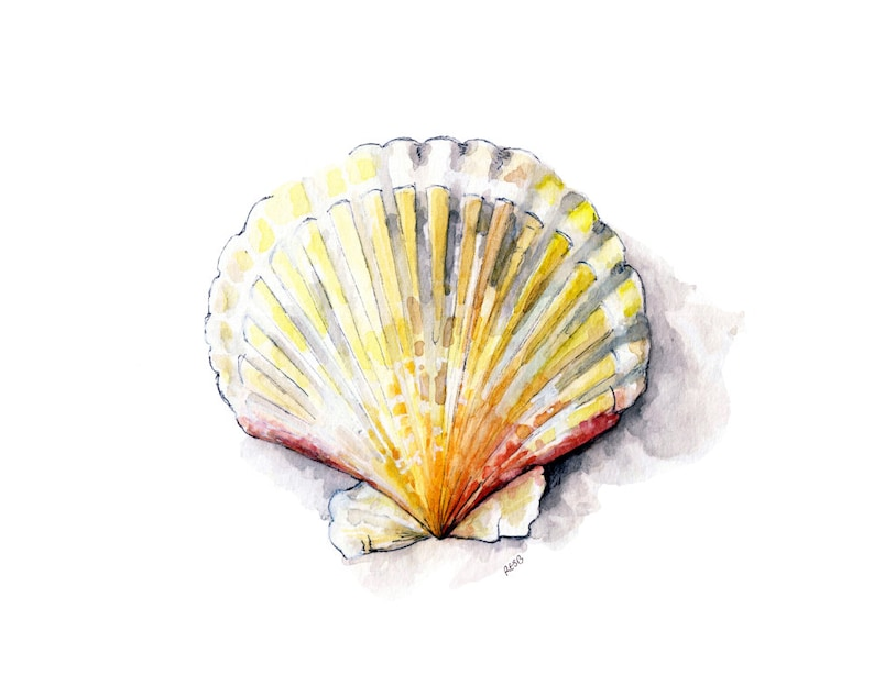Seashell Painting 2  Print from Original Watercolor Painting image 0