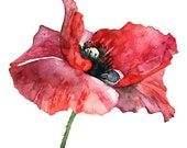 """Red Poppy Painting - Print from my Original Watercolor Painting, """"Dressed in Red"""", Red Flower, Poppy Painting, Watercolor Flower, Poppies"""