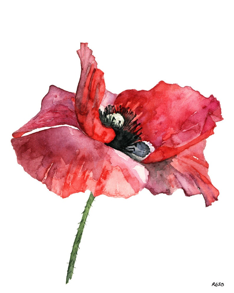 Red Poppy Painting  Print from my Original Watercolor image 0