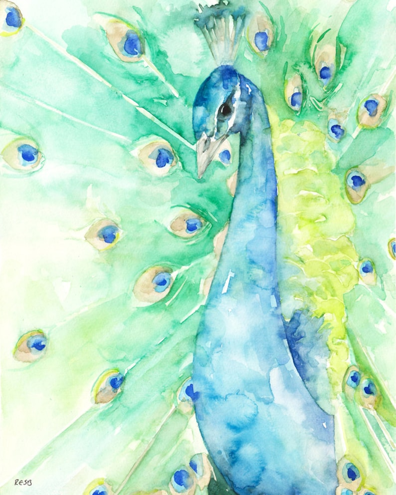 Peacock Painting  Print from Original Watercolor Painting image 0