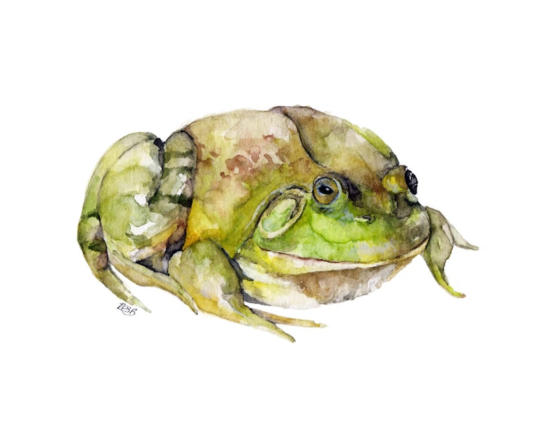 Frog Painting  Print from Original Watercolor Painting image 0