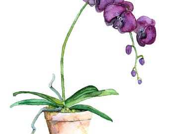 """Potted Orchid Painting - Print titled, """"Purple Orchid"""",Orchid Painting, Orchid Print, Botanical, Potted Plant, Orchid Plant, Flower Painting"""