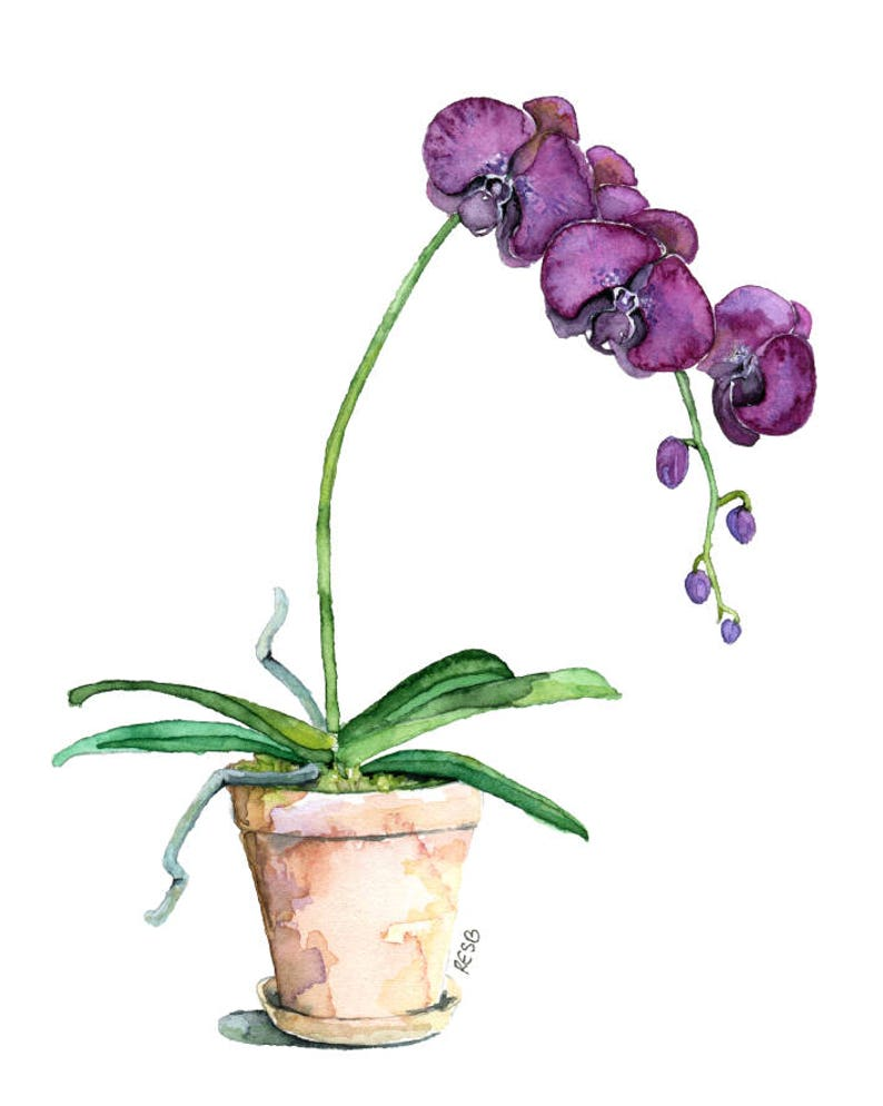 Potted Orchid Painting  Print titled Purple image 0