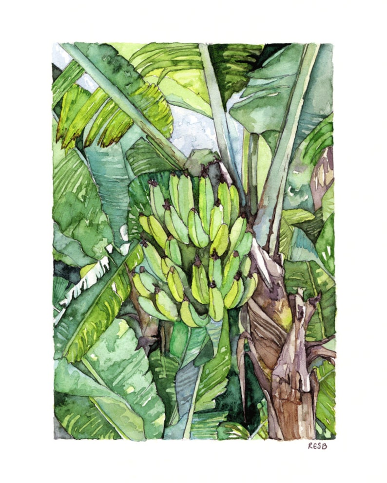 Banana Tree Painting  Print from Original Watercolor image 0
