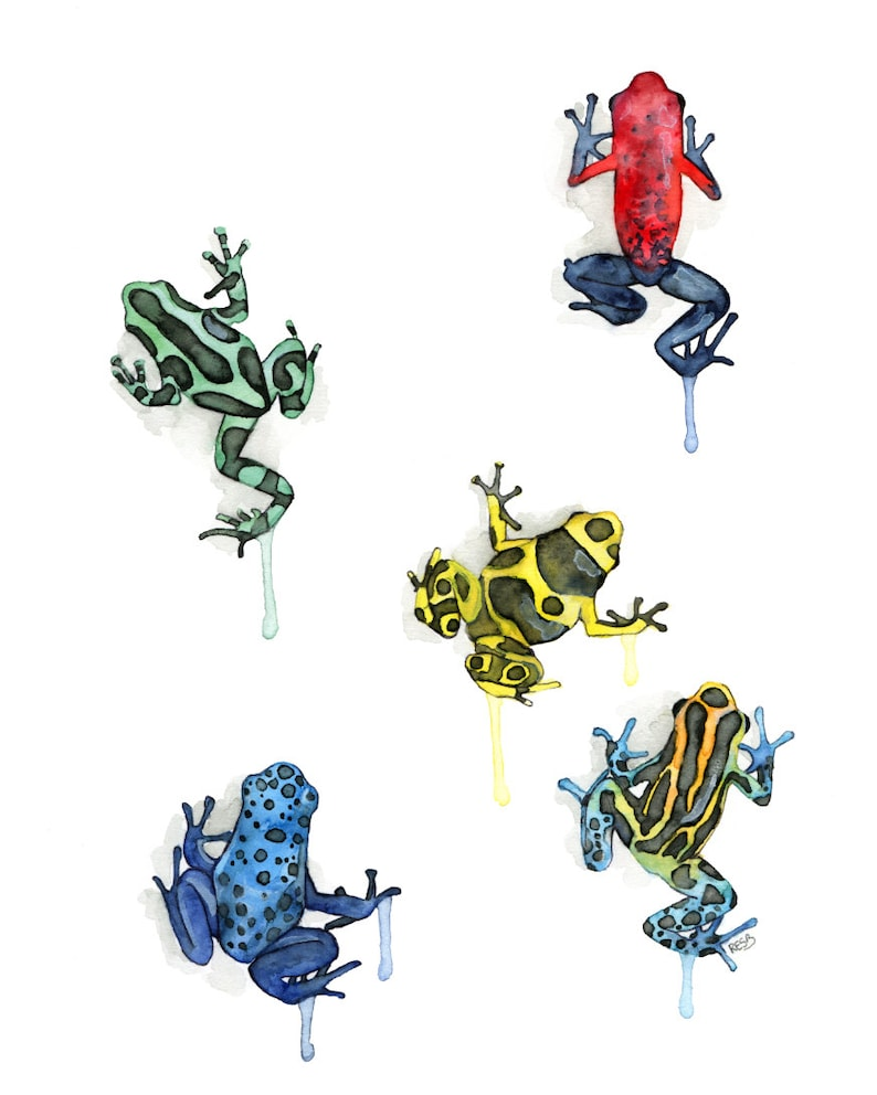 Poison Dart Frog Print  From my Original Watercolor Painting image 0