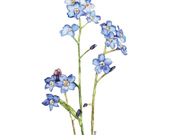"""Forget Me Not Painting - Print from my Original Watercolor Painting, """"Elaine"""", Forget Me Not Flower, Blue Flower, Watercolor Flower, Flowers"""