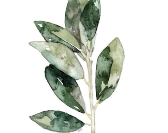 """Bay Leaves Herb Painting - Print from Original Watercolor Painting, """"Bay Leaves"""", Kitchen Decor, Green Herb, Botanical"""