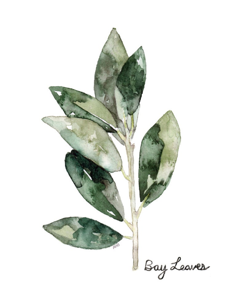 Bay Leaves Herb Painting  Print from Original Watercolor image 0