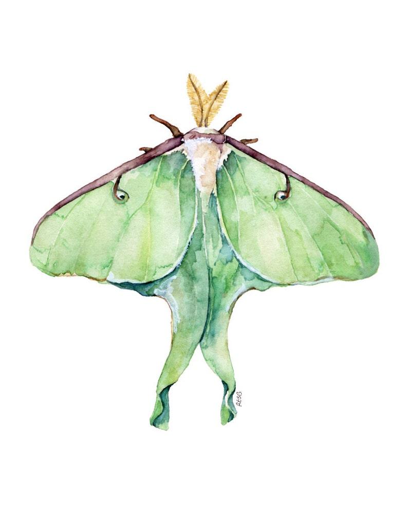 Luna Moth Print  Painting titled Luna Moth image 0