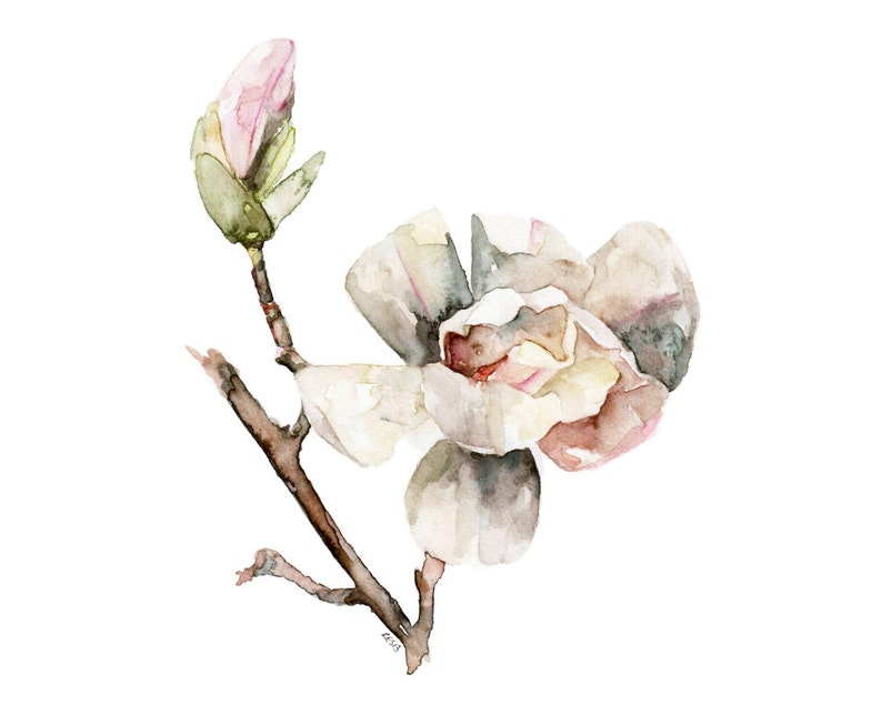 Magnolia Painting  Print from Original Watercolor Painting image 0