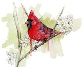 """Cardinal Painting - Print from Original Watercolor Painting, """"Cardinal"""", Bird, Songbird, Red Bird"""