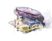 Seashell Painting - Print...