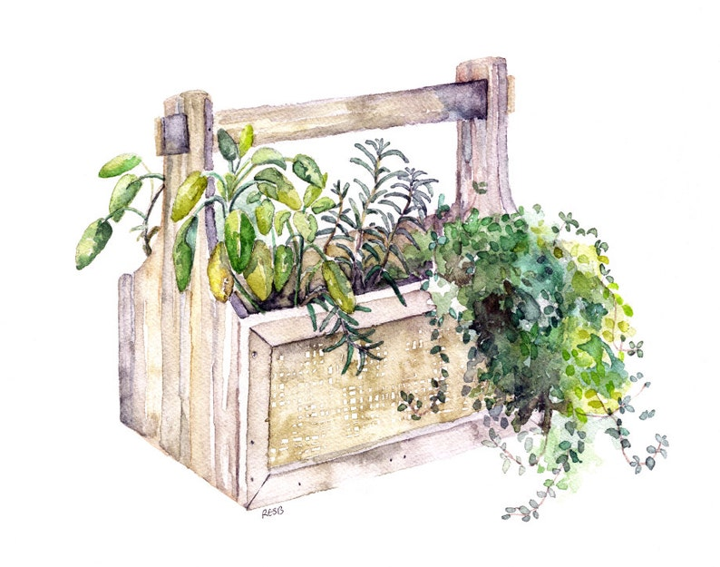 Potted Herb Painting  Print from Original Watercolor image 0