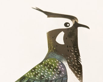 Lapwing - Limited Edition Art Print