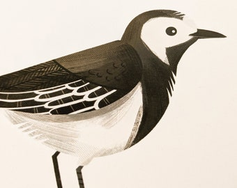 Pied Wagtail - Limited Edition Art Print