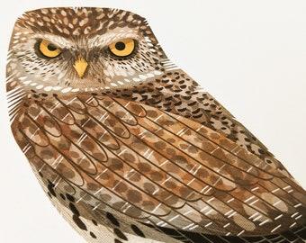 Little owl - Limited Edition Art Print
