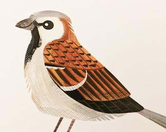 Sparrow - Limited Edition Art Print
