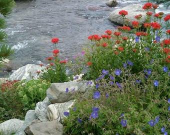 Breckenridge Stream, Colorado, Wild flowers, Moutains