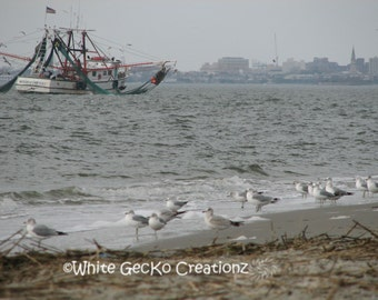 Shrimp and Seagulls, Beach, Sullivans  Island SC, Charleston Harbor