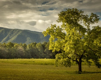 The Tree - Fine Art Print by Mike Sutton Jr.