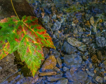 Leaf and Water - Fine Art Print by Mike Sutton Jr.
