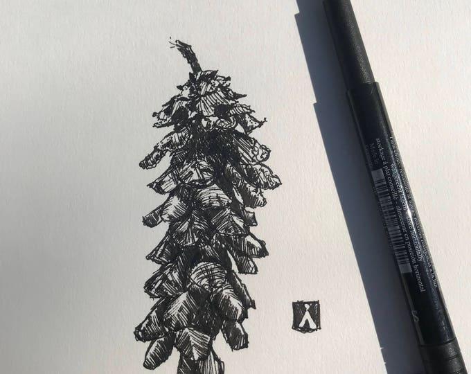 KillerBeeMoto: Pen Sketch of a Pine Cone