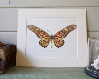 Vintage Bookplate of African Giant Swallowtail Butterfly  1965, Mounted Nature Print, Vintage Art