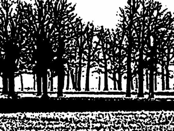 Trees Black and White - Art Photo- Digital Download - Nature Photography