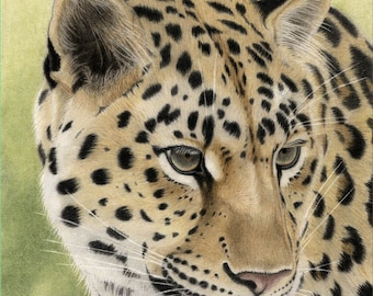 Draw a Leopard: Comprehensive tutorial using coloured pencil