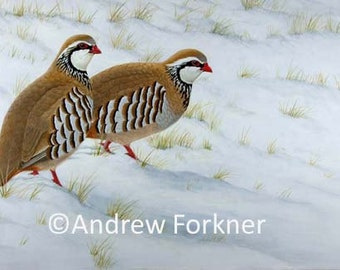 Hard Times. Limited Edition Fine Art Giclee Print of Red-legged Partridges. Individually signed and numbered by the artist.