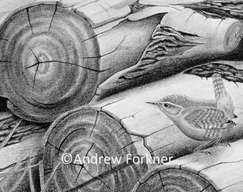 On the Logpile. Limited Edition Fine Art Giclee Print of a Wren. Individually signed and numbered by the artist.