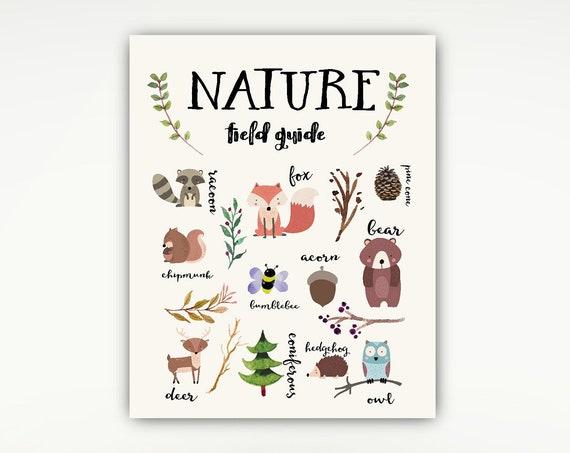 Nature Poster, Woodland Print, Nursery, Kids, Field Guide, Animals #677