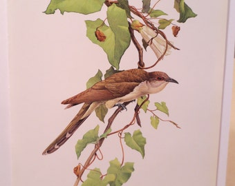 Vintage Black Billed Cuckoo 1960s Frameable Picture Wall Art Print Of Bird Watercolor By JF Lansdowne Item 530