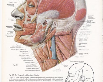 vintage human anatomy print frameable picture, wall art, print of head and  neck, medical illustration, 8 5 x 11