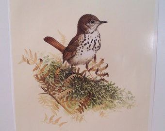 Vintage Hermit Thrush Print Full Color 1960s Frameable Picture, Wall  Art Print of Bird Watercolor by  J.F. Lansdowne Item 416