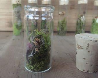 Wild Air Plant Tiny Terrarium