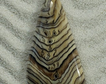 Small But Very Pretty Example of Hell's Canyon Herringbone Sequoia Petrified Wood