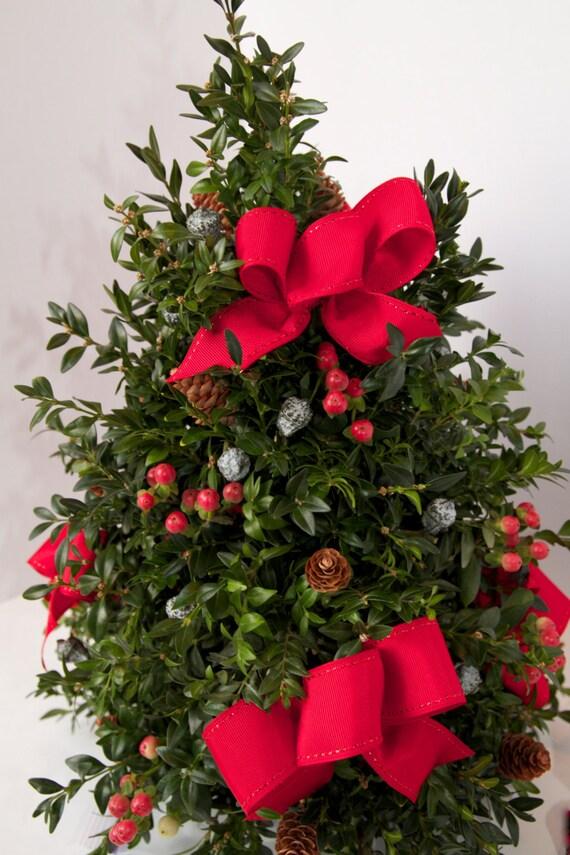 Christmas Trees Hyannis