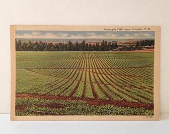 ON SALE Vintage Honolulu HI 1940's 1950's Linen Postcard Pineapple Fields Unused Old Oahu