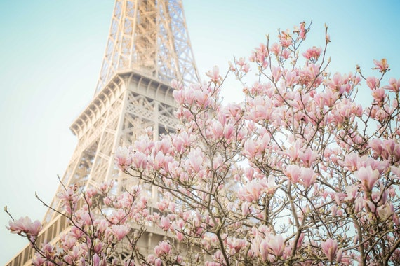 Paris Photography Magnolia Blossoms At The Eiffel Tower Etsy
