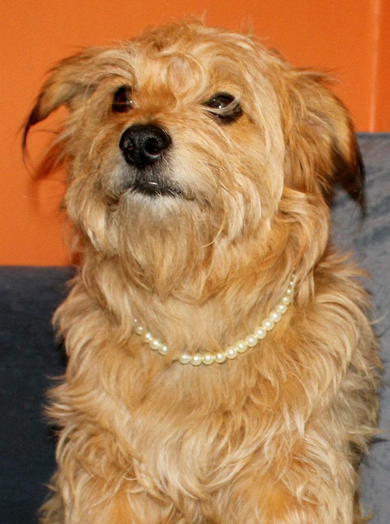 53f0ac3f0010 Cream Pearl Dog Collar. Off White Pearl Puppy or Kitten