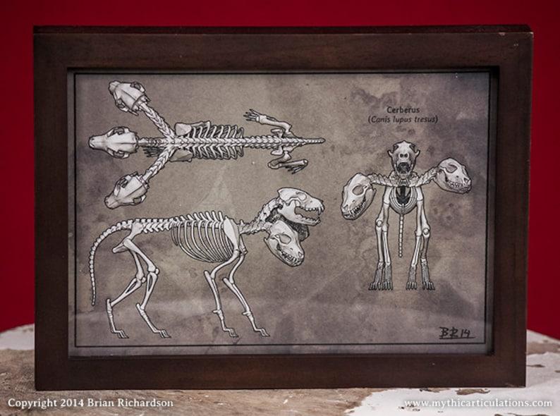 Cerberus Skeleton Faux-Scientific Print image 0