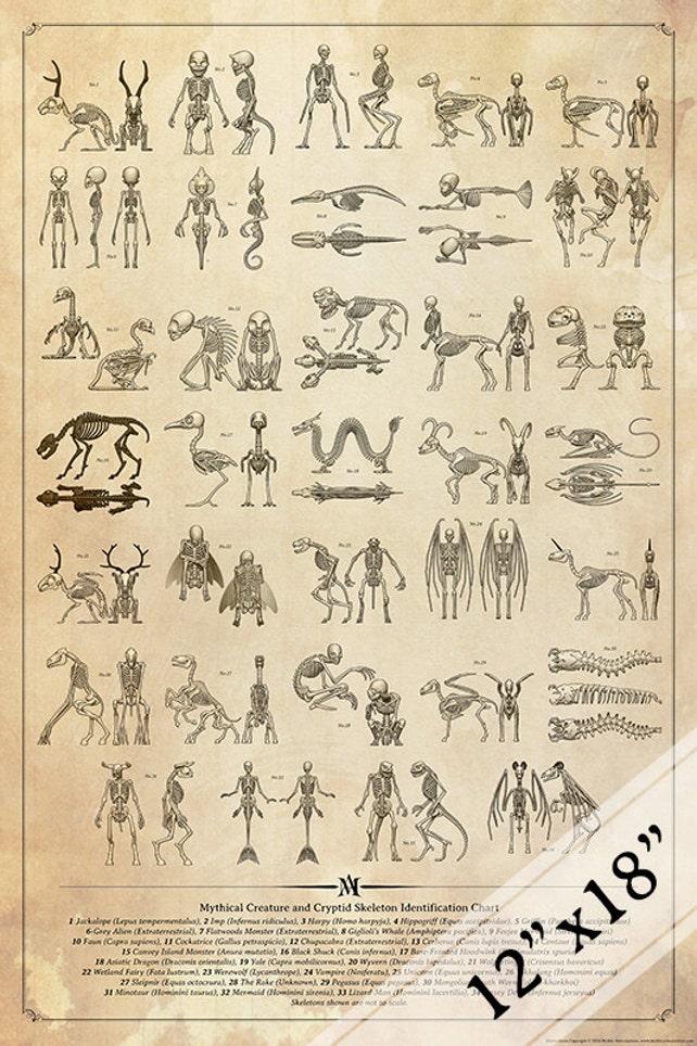 Mythischen Wesen und Cryptid Skelett Identifikation Diagramm | Etsy