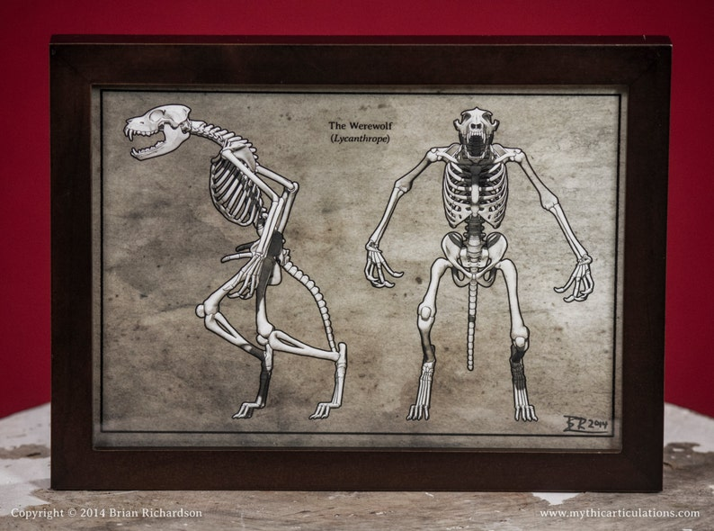 Werewolf Skeleton Faux-Scientific Print image 0
