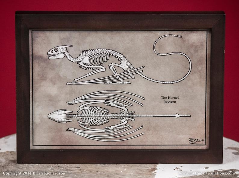 Horned Wyvern Dragon Skeleton Faux-Scientific Print image 0