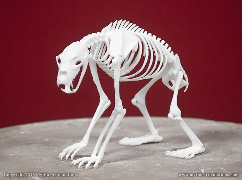 Nandi Bear Skeleton 3D Print Taxidermy Sculpture image 0