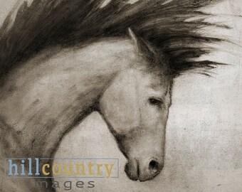 Equine Portrait Signed Canvas Print