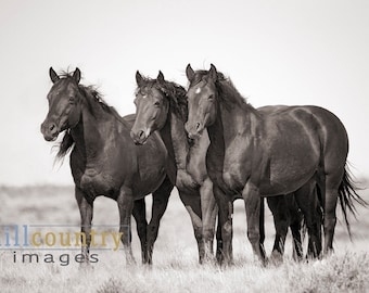 Wild Horse Photography Trio, McCullough Peaks near Cody Wyoming signed Print or Canvas