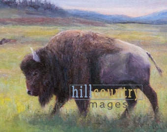 Yellowstone Bison, Buffalo, Signed Fine Art Print